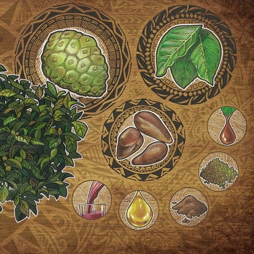 Elements of noni: the noni tree article image