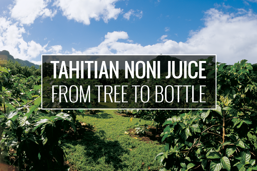 Tahitian Noni Juice: From tree to bottle