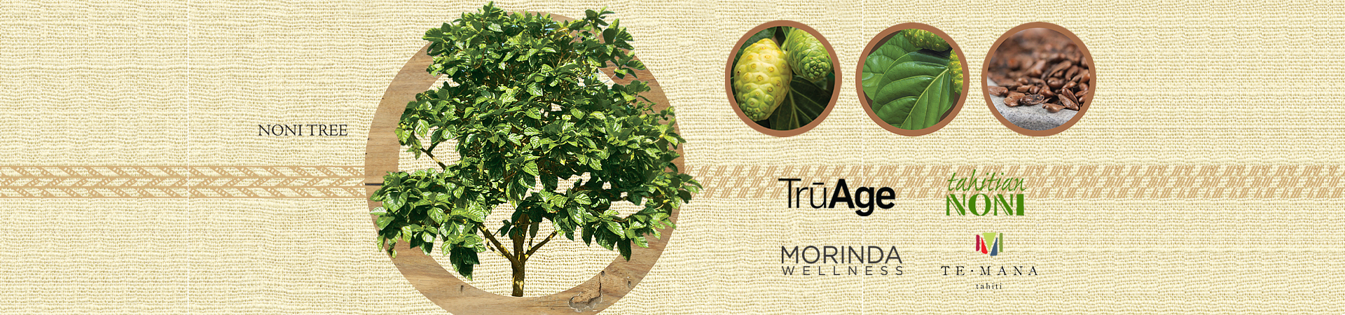 Noni Tree - hidden